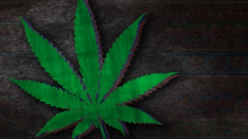 """Фото: Елена Андреева, """"«Мир24»"""":http://mir24.tv/, марихуана, наркотики"""