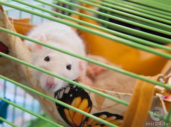 Получено жизнеспособное потомство от двух мышей-самок