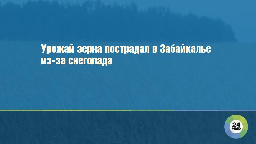 Урожай зерна пострадал в Забайкалье из-за снегопада