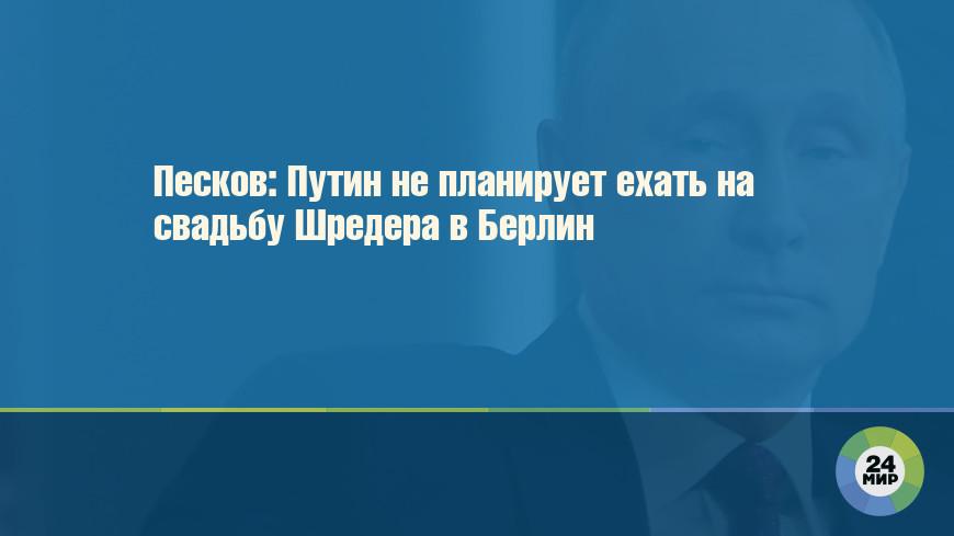 Песков: Путин не планирует ехать на свадьбу Шредера в Берлин