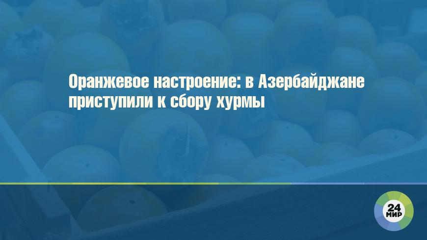 Оранжевое настроение: в Азербайджане приступили к сбору хурмы