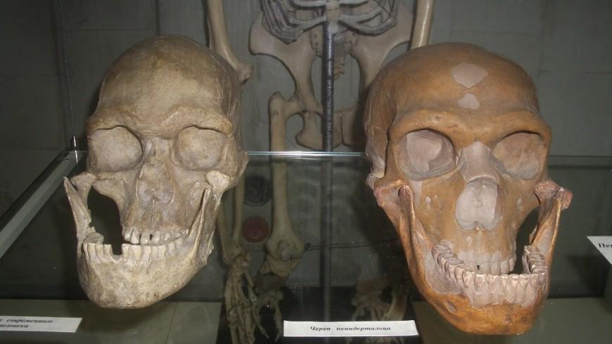 Секреты выживания: у неандертальцев были «травматологи» и акушерки