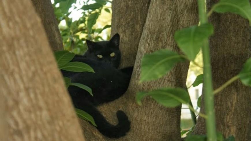 """Фото: Елена Андреева, """"«Мир24»"""":http://mir24.tv/, кот, черный кот"""