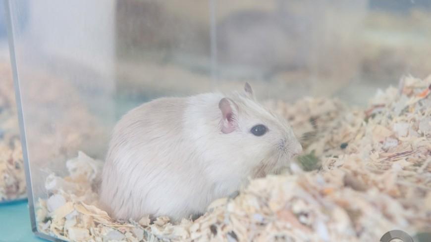 Мыши доказали, что пожилая кожа работает лучше молодой