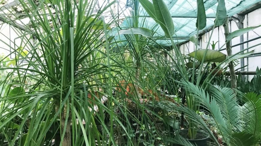 Тбилисский ботанический сад открыл весенний сезон. Тропическая оранжерея Тбилисского ботанического сада