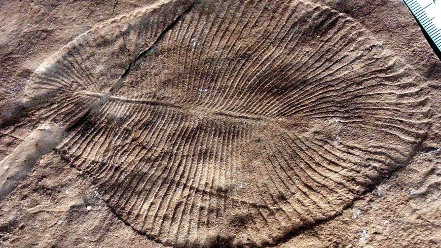 Следы древнейшего предка всех животных нашли в России