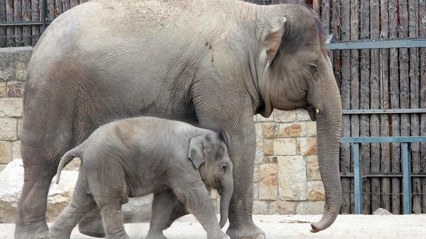 """© Александр Попов, """"«МИР 24»"""":http://mir24.tv/, фото, животные, слон, слоны, слоненок"""