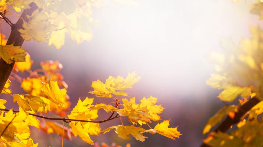 Астролог рассказал, как пережить день осеннего равноденствия