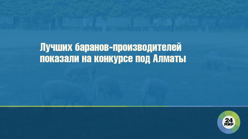 Лучших баранов-производителей показали на конкурсе под Алматы
