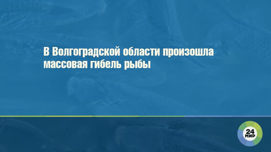 В Волгоградской области произошла массовая гибель рыбы