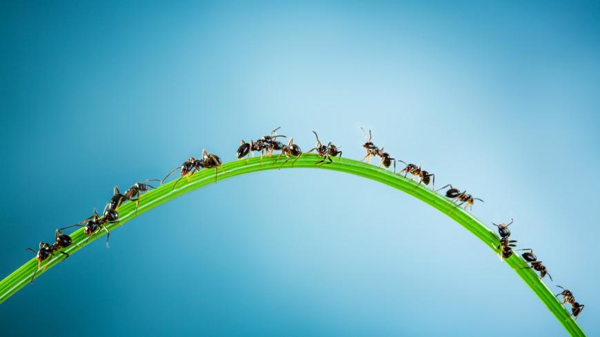Смертельный рой. Полчища насекомых атакуют по всему миру