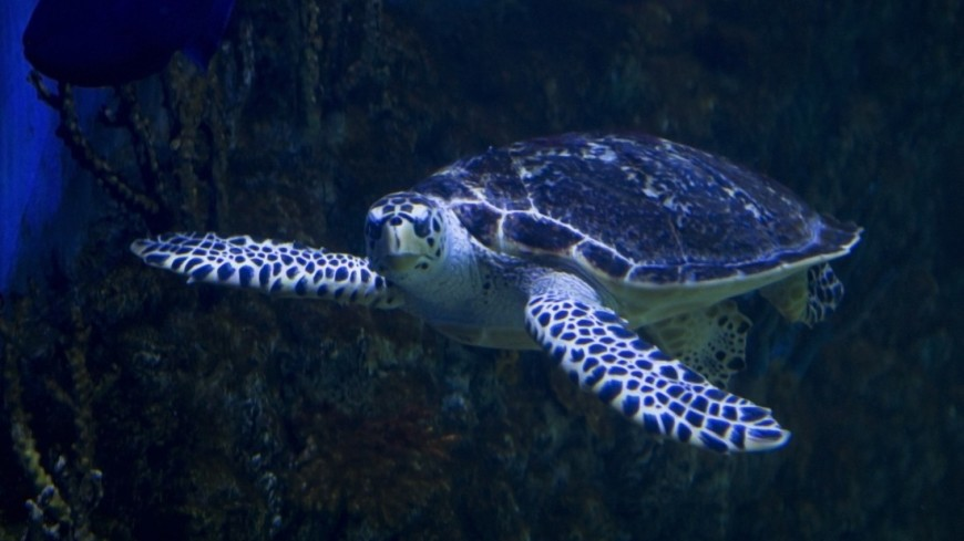 Мир без черепах: свыше 60% видов вымирают или уже исчезли