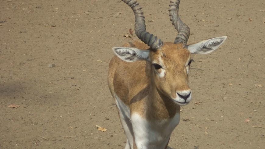 В Африке турист вытащил антилопу из грязевой ямы