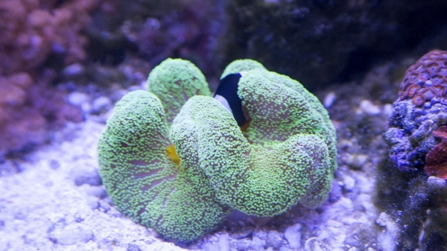 Коралл. в Крокус Сити Океанариум