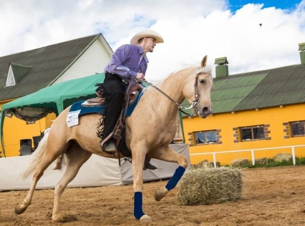 Танцы на лошадях: в Беларуси проходит этап Кубка мира по выездке