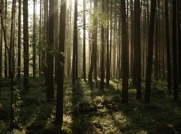 Неделя леса: сотрудники Исполкома СНГ высадили деревья под Минском