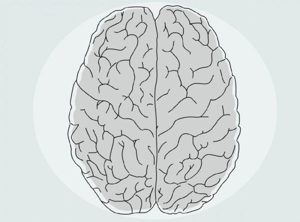 Бессмертию быть? Эксперты рассказали, может ли мозг жить вечно