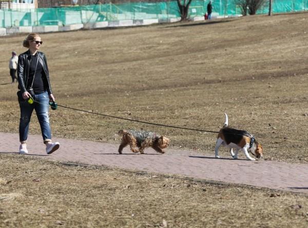 Прогулки с собакой снижают риск преждевременной смерти