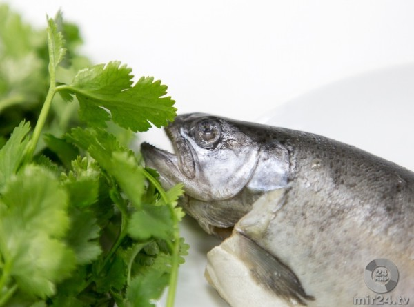 Форель на экспорт: Кыргызстан накормит рыбой страны ЕАЭС