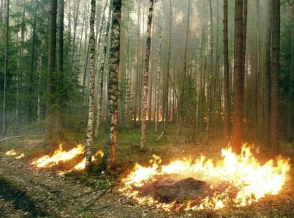 МЧС: В населенных пунктах Забайкалья потушили все пожары