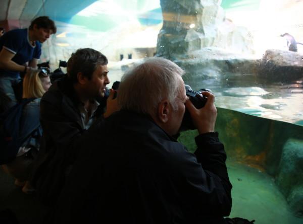 Гости Московского зоопарка впервые увидели «парад пингвинов»
