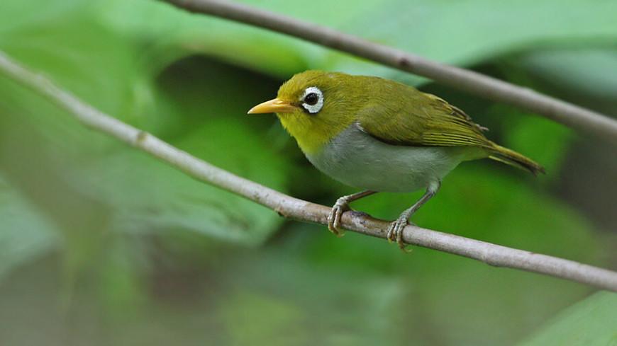 В Индонезии нашли неизвестных науке птиц