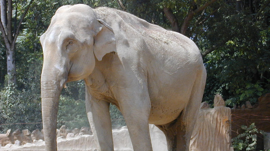 Загадки природы: почему индийские слоны пережили вымирание