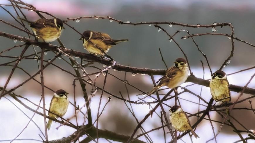 Весенний лес,весна, лес, оттепель, птица, ,весна, лес, оттепель, птица,