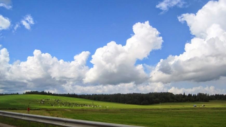 """Фото: Мария Попова, """"«Мир 24»"""":http://mir24.tv/, коровы, небо, дорога"""