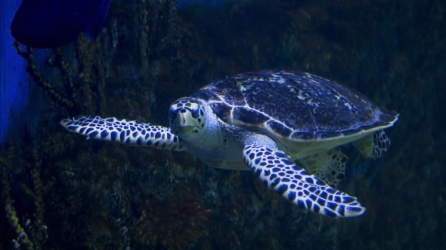 Черепаха в Крокус Сити Океанариум