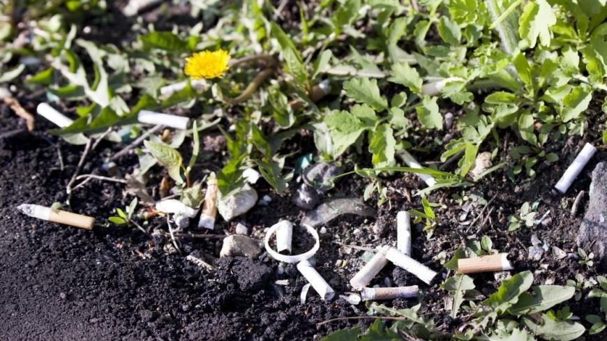 """Фото: Мария Андросова (МТРК «Мир») """"«Мир 24»"""":http://mir24.tv/, мусор, окурки"""
