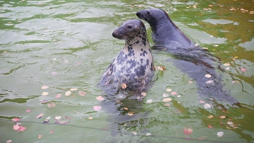 """Фото: Елизавета Шагалова, """"«МИР 24»"""":http://mir24.tv/, зоопарк, тюлень, тюлени, морской котик"""