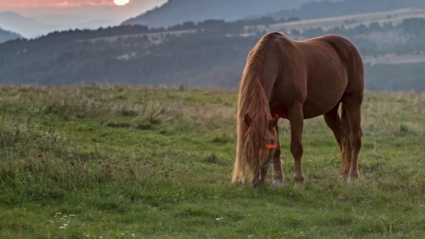 """Фото: Петр Королев, """"«МИР 24»"""":http://mir24.tv/, поле, лошадь"""