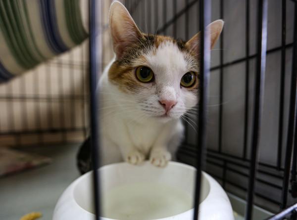 «Отказываются под предлогом «надоел». Истории кошек из приюта