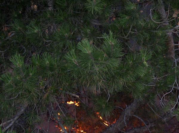 На Канарских островах горят леса: эвакуированы почти 5 тыс. человек