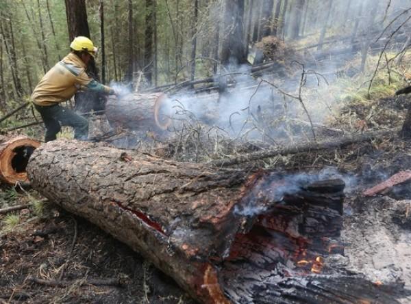 В российских заповедниках потушили последний лесной пожар