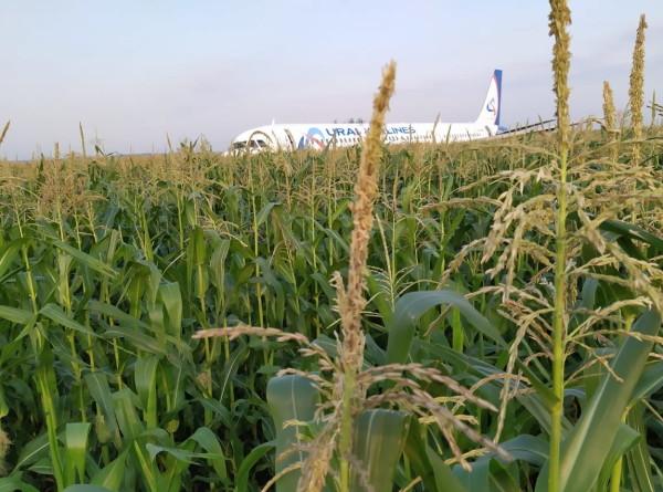 Чудо на кукурузном поле: экипаж А321 посадил аварийный самолет (ФОТО)