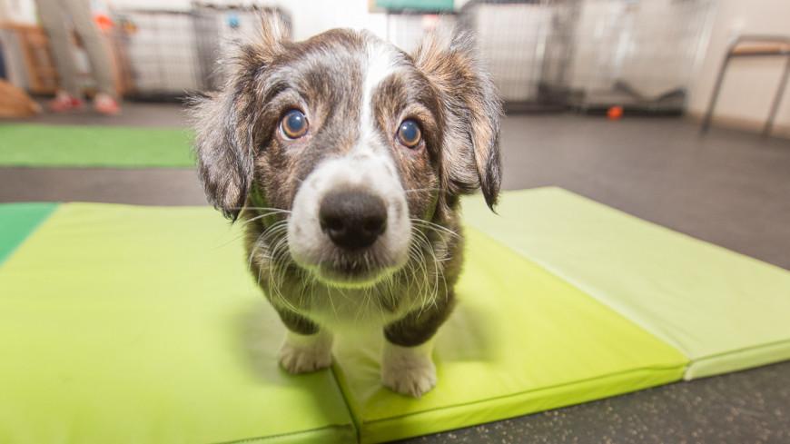 """Фото: Алан Кациев (МТРК «Мир») """"«Мир 24»"""":http://mir24.tv/, собака, животные, собаки"""