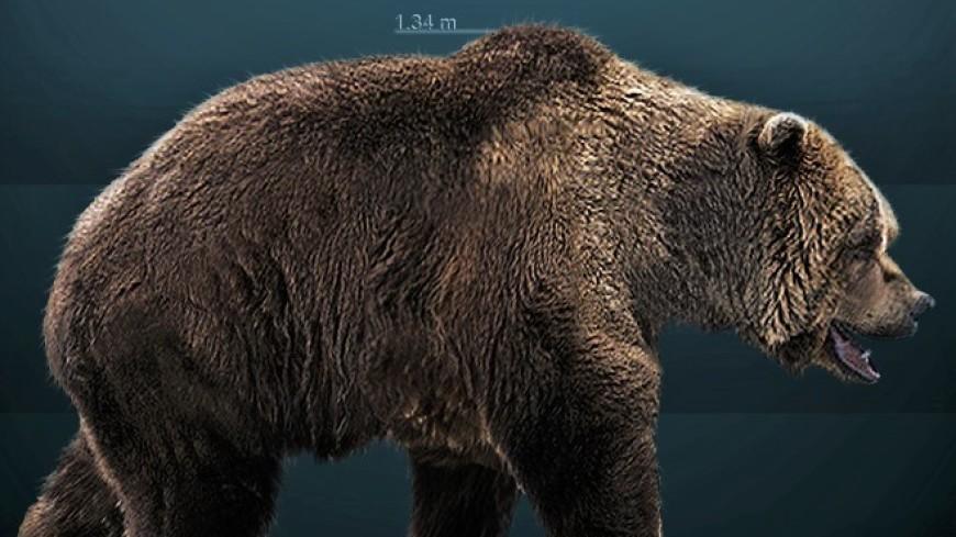 Названа причина вымирания пещерных медведей
