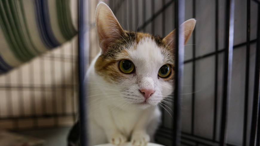 «Отказываются под предлогом: «надоел». Истории кошек из приюта