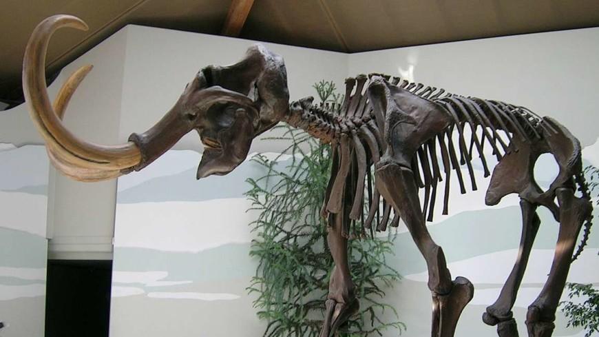 Американский подросток нашел 17-сантиметровый зуб мамонта
