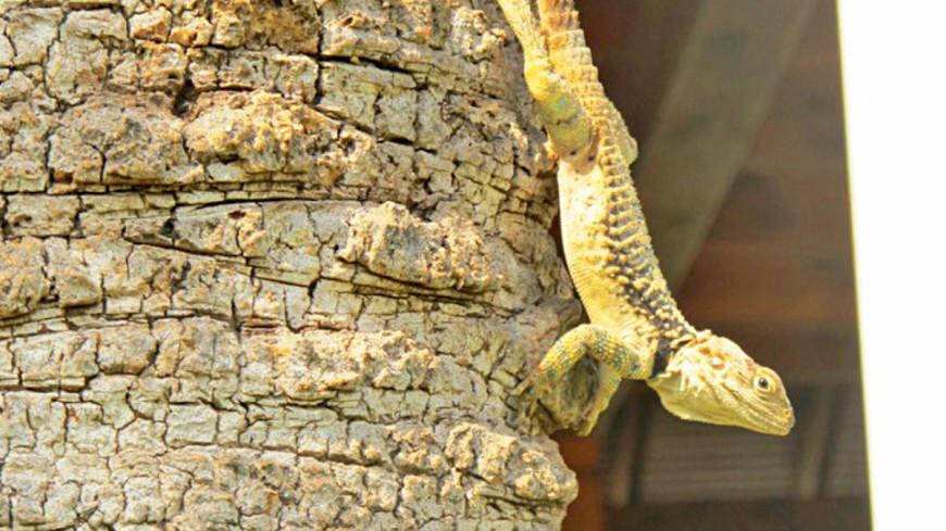 """Фото: Екатерина Дегтерева (МТРК «Мир») """"«Мир 24»"""":http://mir24.tv/, ящерица, зоопарк, животные"""
