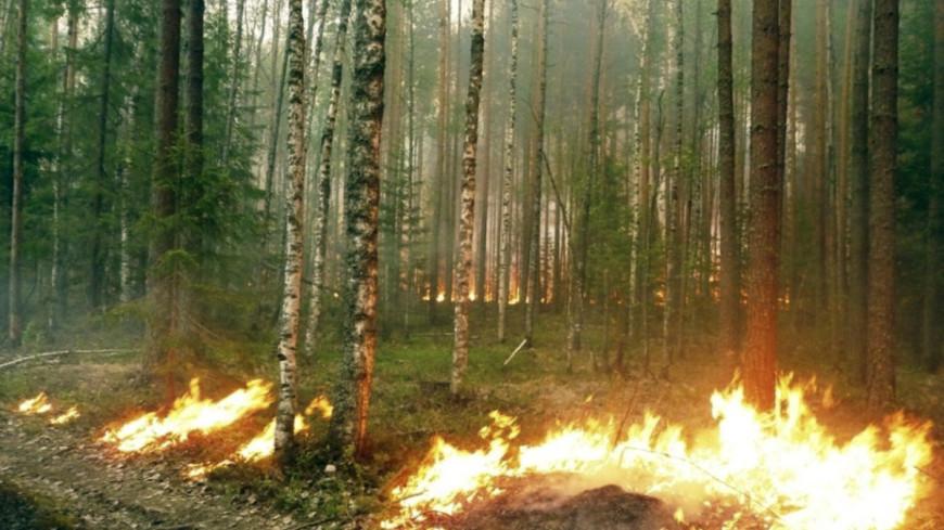 """Фото: """"Пресс-служба МЧС России"""":http://www.mchs.gov.ru/ _(автор не указан)_, лесной пожар"""