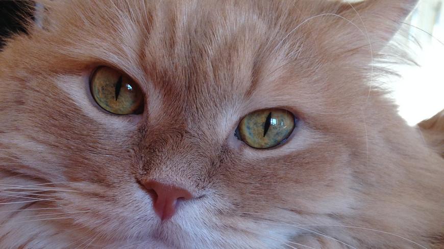 "Фото: Светлана Родина, ""«МИР 24»"":http://mir24.tv/, кот"