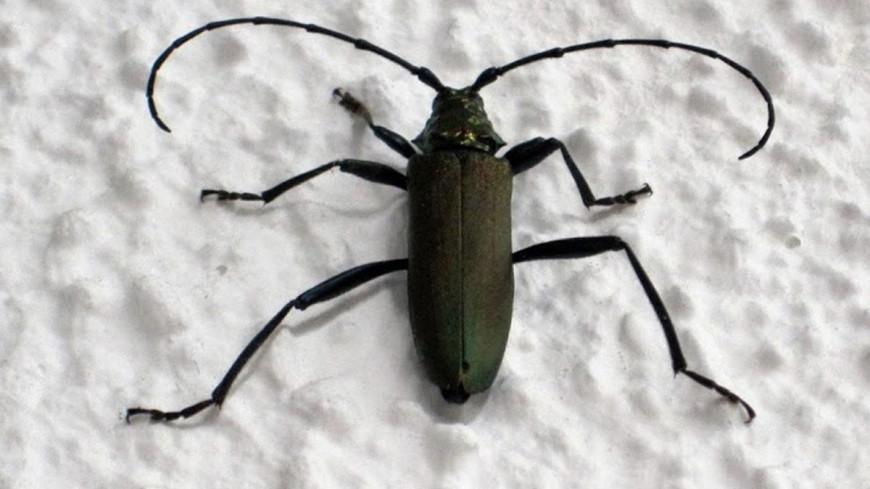 """Фото:  """"«Мир 24»"""":http://mir24.tv/, жук, насекомые"""