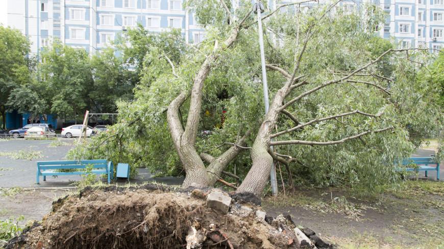 Сильный ветер в Москве за двое суток повалил 150 деревьев и повредил десятки авто