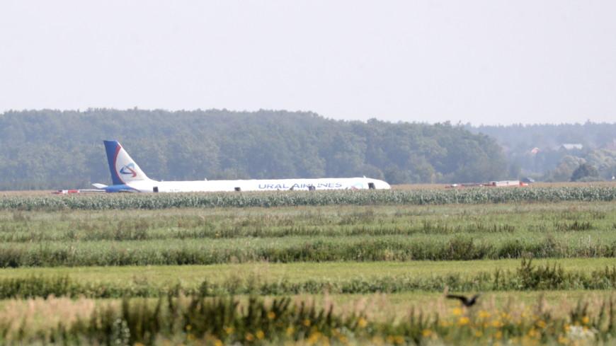 Второй пилот аварийно севшего самолета А321 госпитализирован