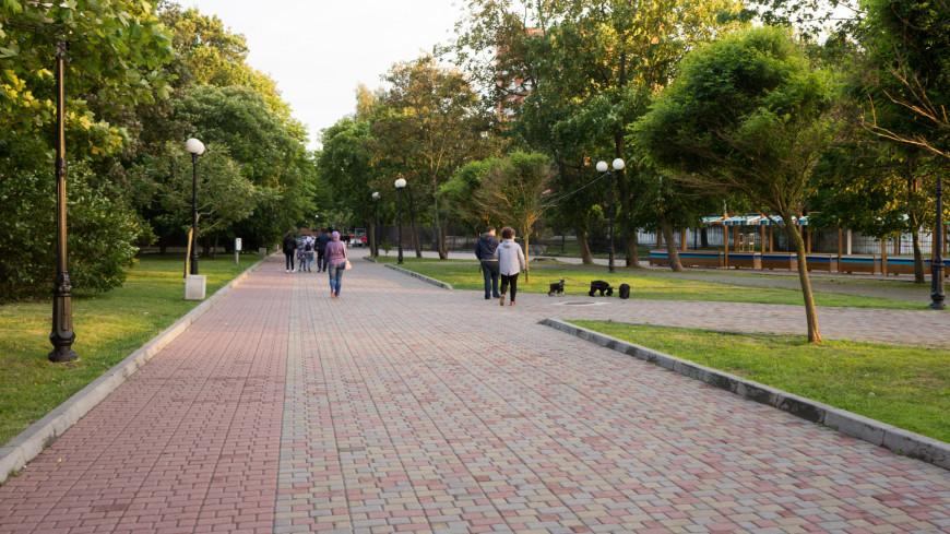 Зеленоградск, парк