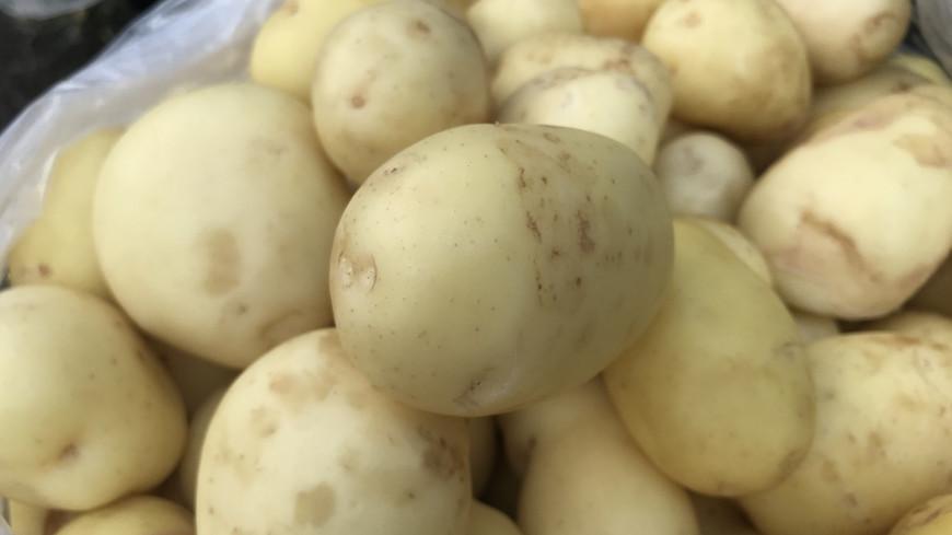 Меньше, да лучше: кыргызстанские фермеры переориентировались на экспорт