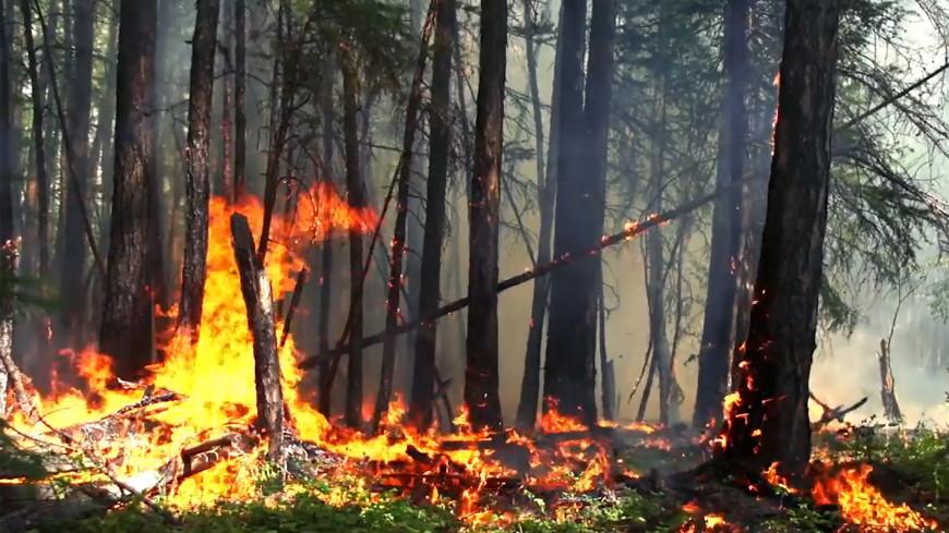 Италия предложила помощь в тушении сибирских пожаров